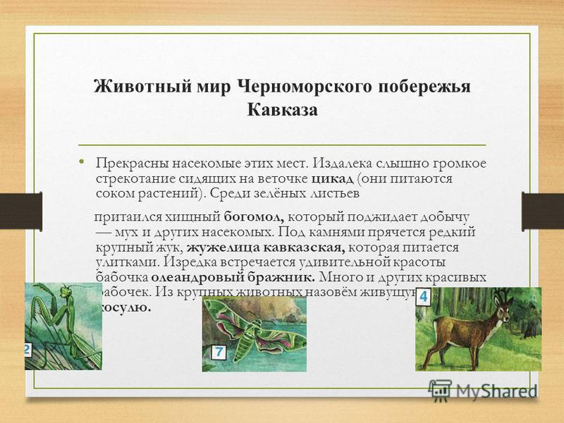 Растения субтропиков. Почвы Черноморского побережья Кавказа плодо родны, а растительность богата. В лесах на скло нах гор растут широколиственные деревья дуб, бук, каштан настоящий. В парках и на городских улицах люди выращивают красивые растения,
