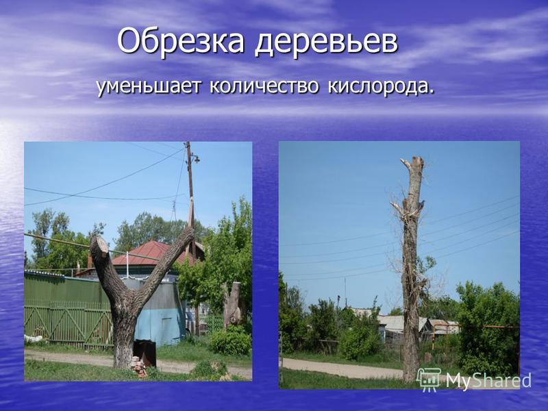 Обрезка деревьев уменьшает количество кислорода. Обрезка деревьев уменьшает количество кислорода.