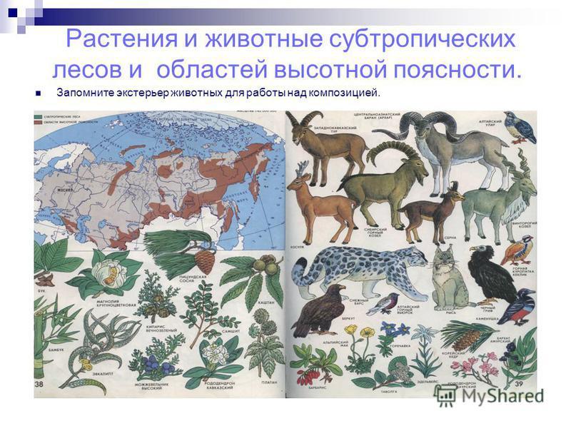 Растения и животные субтропических лесов и областей высотной поясности. Запомните экстерьер животных для работы над композицией.