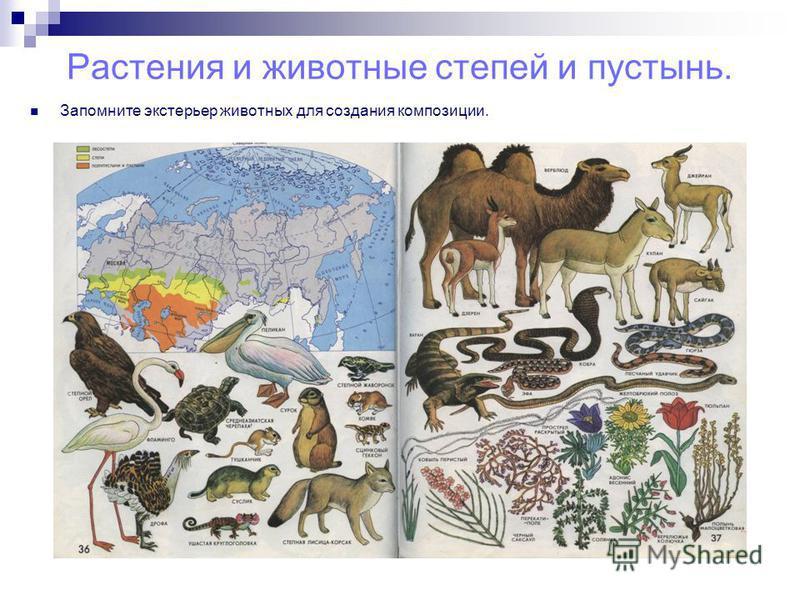 Растения и животные степей и пустынь. Запомните экстерьер животных для создания композиции.