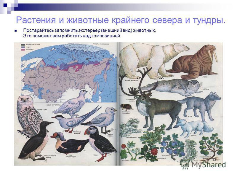 Растения и животные крайнего севера и тундры. Постарайтесь запомнить экстерьер (внешний вид) животных. Это поможет вам работать над композицией.