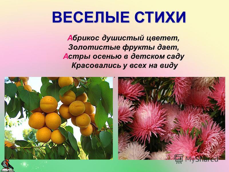 . Абрикос душистый цветет, Золотистые фрукты дает, Астры осенью в детском саду Красовались у всех на виду ВЕСЕЛЫЕ СТИХИ