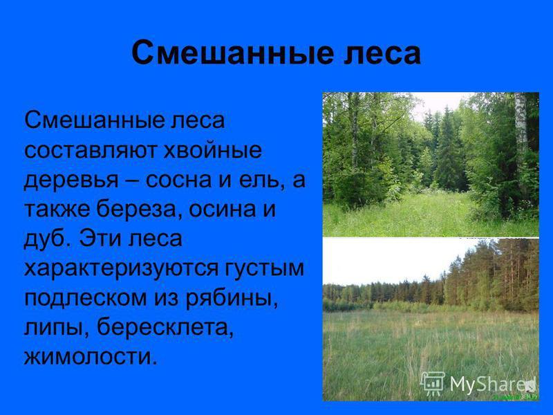 Смешанные леса Смешанные леса составляют хвойные деревья – сосна и ель, а также береза, осина и дуб. Эти леса характеризуются густым подлеском из рябины, липы, бересклета, жимолости.