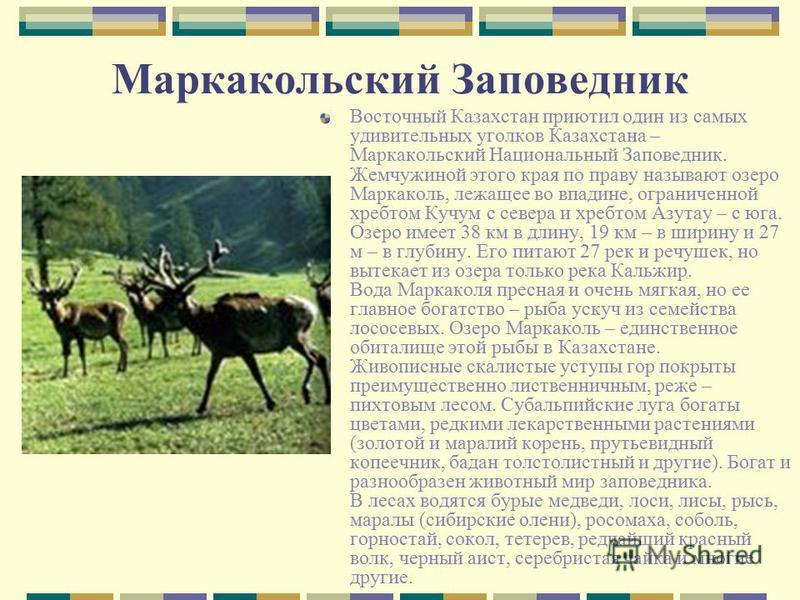 Маркакольский Заповедник Восточный Казахстан приютил один из самых удивительных уголков Казахстана – Маркакольский Национальный Заповедник. Жемчужиной этого края по праву называют озеро Маркаколь, лежащее во впадине, ограниченной хребтом Кучум с севе