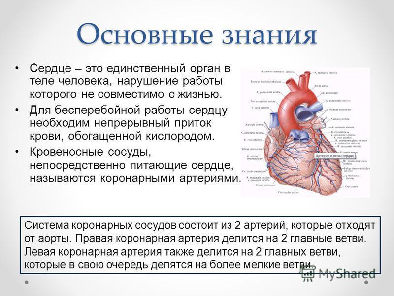 Основные знания Сердце – это единственный орган в теле человека, нарушение работы которого не совместимо с жизнью. Для бесперебойной работы сердцу необходим непрерывный приток крови, обогащенной кислородом. Кровеносные сосуды, непосредственно питающи