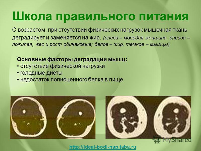 С возрастом, при отсутствии физических нагрузок мышечная ткань деградирует и заменяется на жир. (слева – молодая женщина, справа – пожилая, вес и рост одинаковые; белое – жир, темное – мышцы). Основные факторы деградации мышц: отсутствие физической н