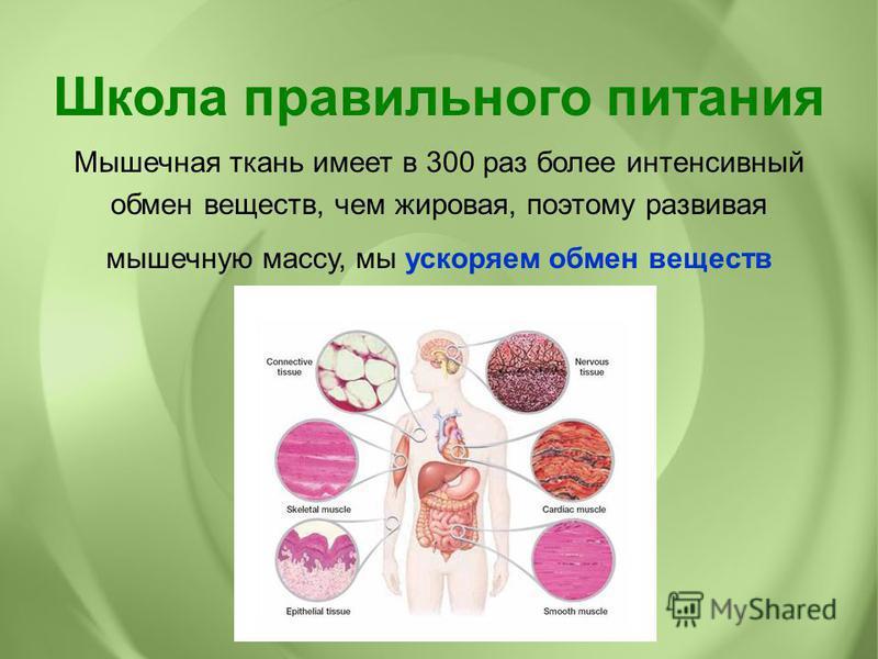 Мышечная ткань имеет в 300 раз более интенсивный обмен веществ, чем жировая, поэтому развивая мышечную массу, мы ускоряем обмен веществ Школа правильного питания
