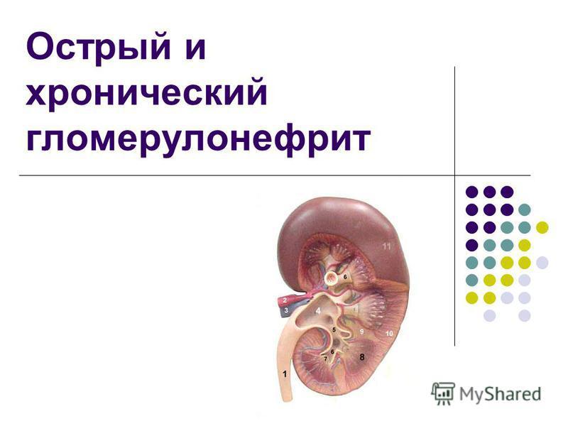 Острый и хронический гломерулонефрит