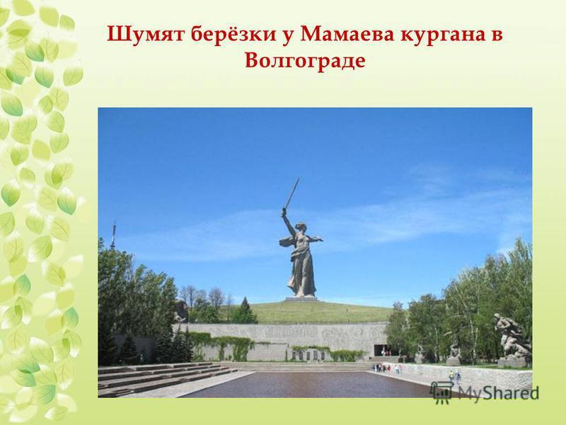 Шумят берёзки у Мамаева кургана в Волгограде