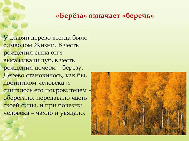 «Берёза» означает «беречь» У славян дерево всегда было символом Жизни. В честь рождения сына они высаживали дуб, в честь рождения дочери – березу. Дерево становилось, как бы, двойником человека и считалось его покровителем – оберегало, передавало час