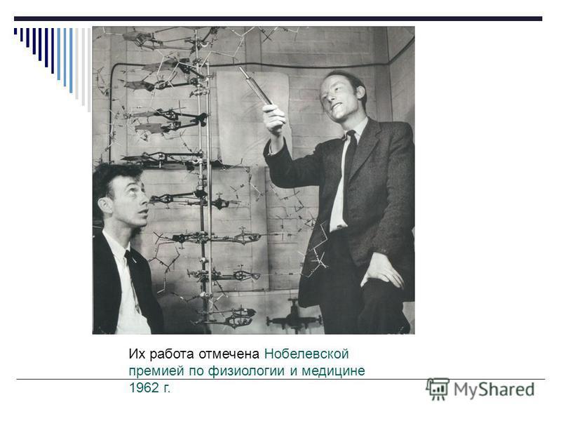Структура двойной спирали ДНК была предложена Френсисом Криком и Джеймсом Уотсоном в 1953 году на основании рентгеноструктурных данных, полученных Морисом Уилкинсом и Розалинд Франклин, и «правил Чаргаффа» Ф.Крик (1916-2004 г.) Д.Уотсон (1928 г.)