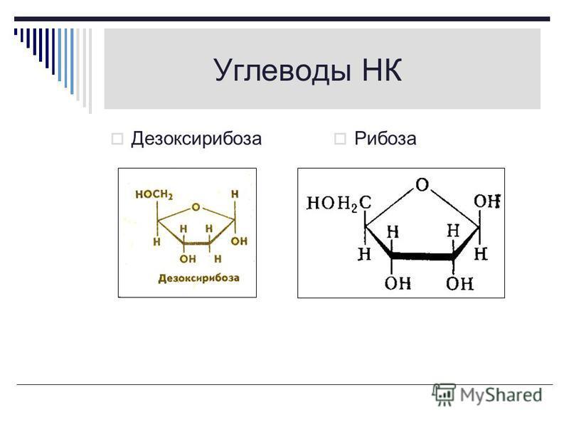 Названия нуклеотидов Названия нуклеотидов немного отличаются от названий соответствующих оснований, и те и другие принято обозначать заглавными буквами : цитозин – цитидин – Ц урацил - уридин - У аденин – аденозин - А тимин - тимидин - Т гуанин - гуа