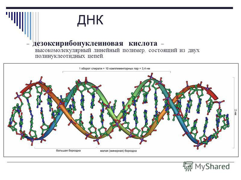 Углеводы НК Дезоксирибоза Рибоза