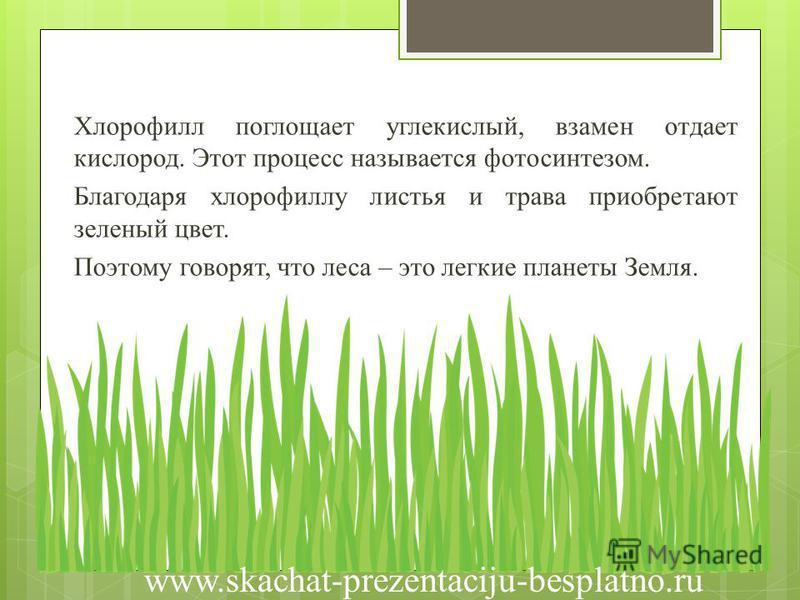 Хлорофилл поглощает углекислый, взамен отдает кислород. Этот процесс называется фотосинтезом. Благодаря хлорофиллу листья и трава приобретают зеленый цвет. Поэтому говорят, что леса – это легкие планеты Земля. www.skachat-prezentaciju-besplatno.ru