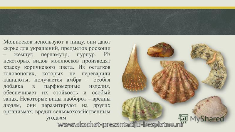 Моллюсков используют в пищу, они дают сырье для украшений, предметов роскоши – жемчуг, перламутр, пурпур. Из некоторых видов моллюсков производят краску коричневого цвета. Из остатков головоногих, которых не переварили кашалоты, получается амбра – ос