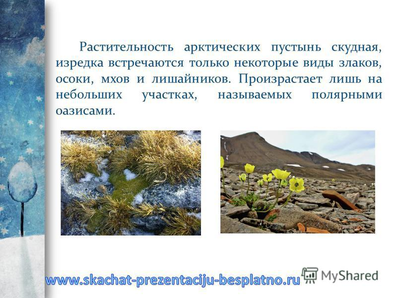 Растительность арктических пустынь скудная, изредка встречаются только некоторые виды злаков, осоки, мхов и лишайников. Произрастает лишь на небольших участках, называемых полярными оазисами.