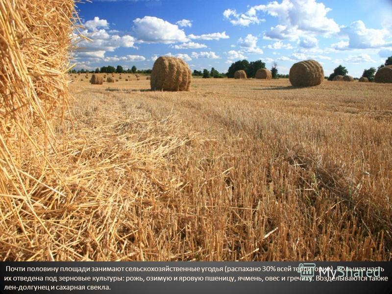 Почти половину площади занимают сельскохозяйственные угодья (распахано 30% всей территории). Большая часть их отведена под зерновые культуры: рожь, озимую и яровую пшеницу, ячмень, овес и гречиху. Возделываются также лен-долгунец и сахарная свекла.