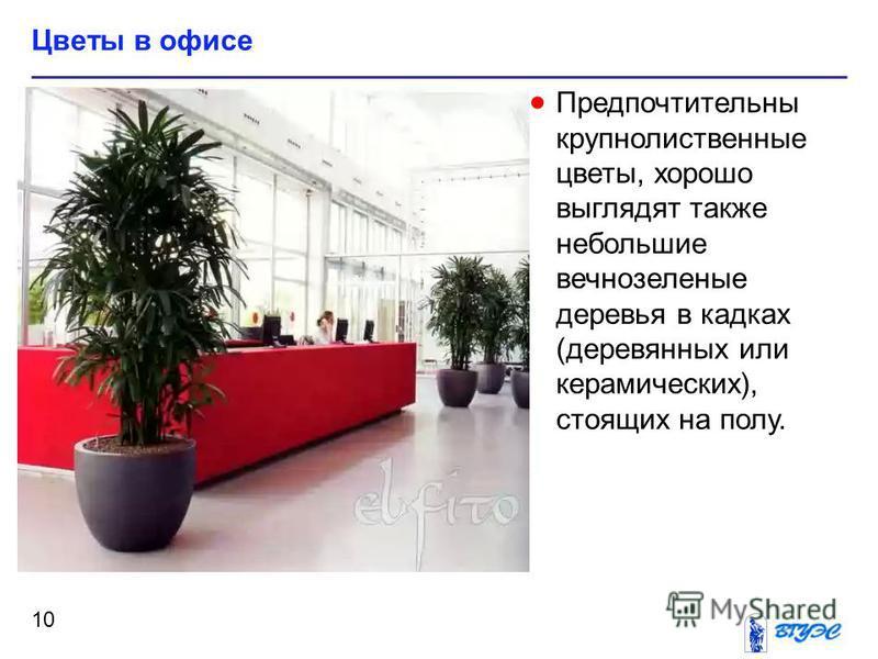 Цветы в офисе 10 Предпочтительны крупно лиственные цветы, хорошо выглядят также небольшие вечнозеленые деревья в кадках (деревянных или керамических), стоящих на полу.