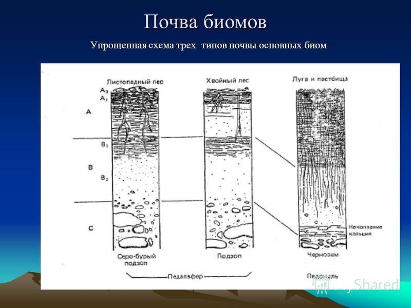Почва биомов Упрощенная схема трех типов почвы основных биом