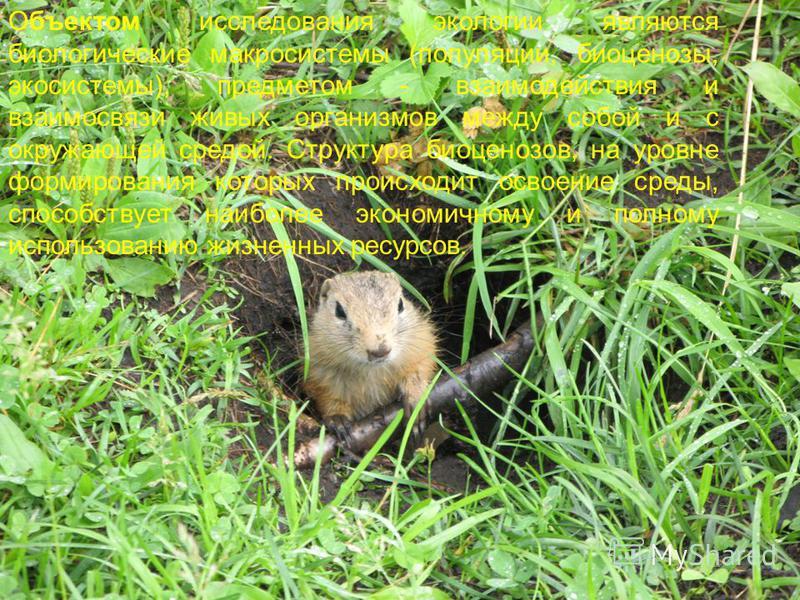 Объектом исследования экологии являются биологические макросистемы (популяции, биоценозы, экосистемы), предметом - взаимодействия и взаимосвязи живых организмов между собой и с окружающей средой. Структура биоценозов, на уровне формирования которых п