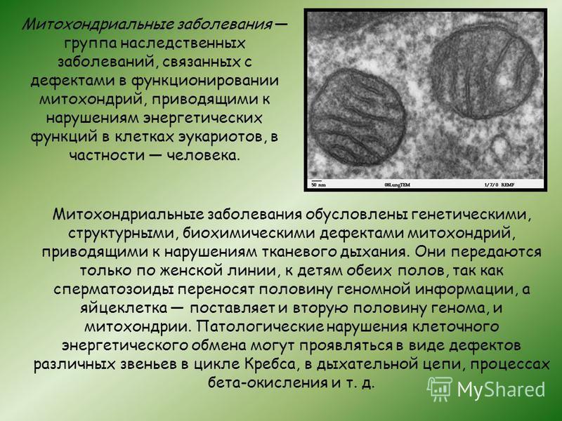 Митохондриальные заболевания группа наследственных заболеваний, связанных с дефектами в функционировании митохондрий, приводящими к нарушениям энергетических функций в клетках эукариотов, в частности человека. Митохондриальные заболевания обусловлены