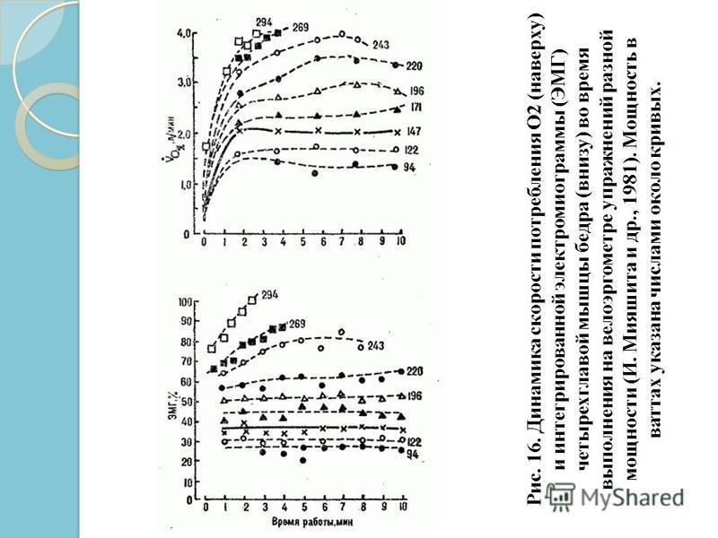 Рис. 16. Динамика скорости потребления О2 (наверху) и интегрированной электромиограммы (ЭМГ) четырехглавой мышцы бедра (внизу) во время выполнения на велоэргометре упражнений разной мощности (И. Мияшита и др., 1981). Мощность в ваттах указана числами