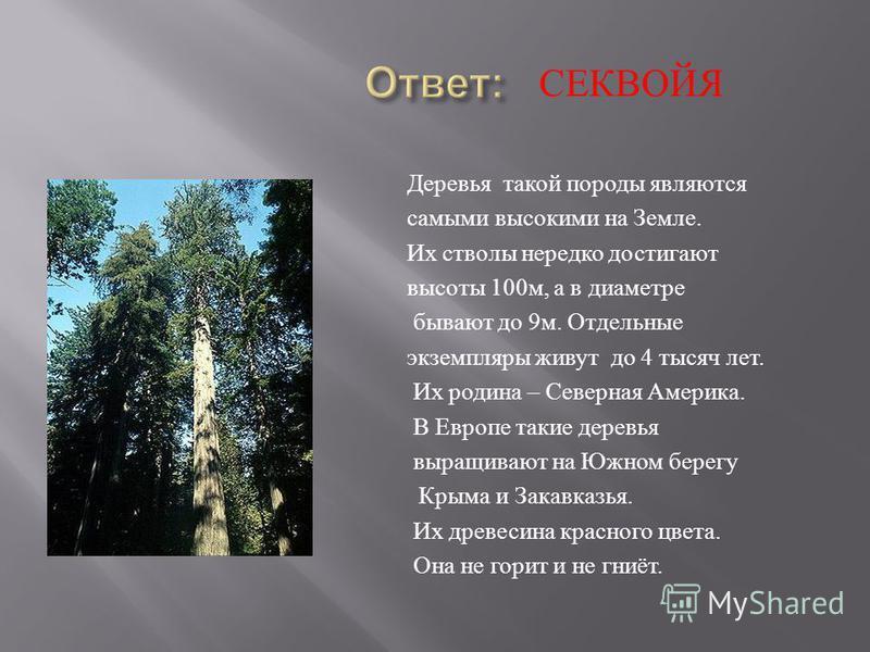 Деревья такой породы являются самыми высокими на Земле. Их стволы нередко достигают высоты 100 м, а в диаметре бывают до 9 м. Отдельные экземпляры живут до 4 тысяч лет. Их родина – Северная Америка. В Европе такие деревья выращивают на Южном берегу К