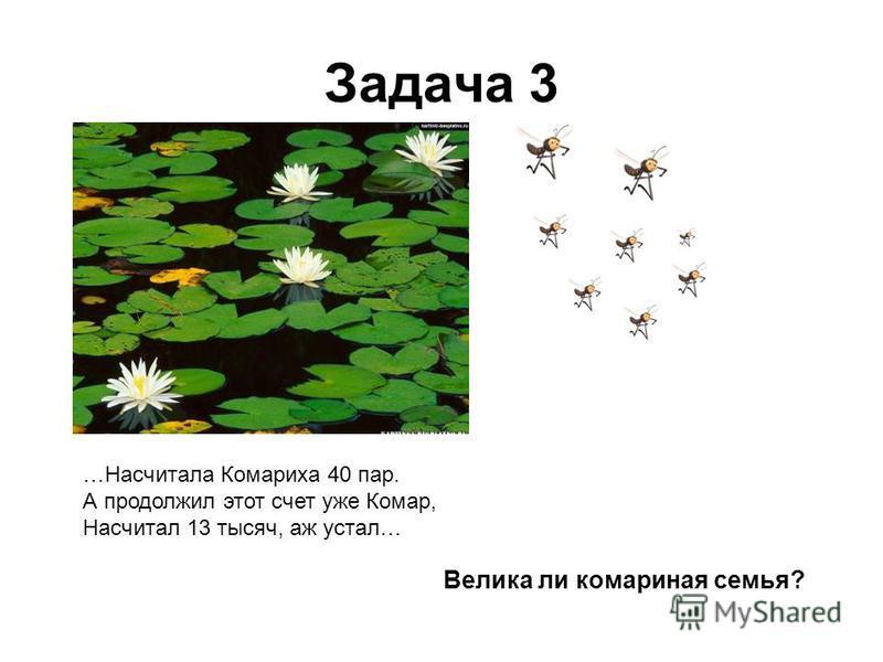 Задача 3 …Насчитала Комариха 40 пар. А продолжил этот счет уже Комар, Насчитал 13 тысяч, аж устал… Велика ли комариная семья?