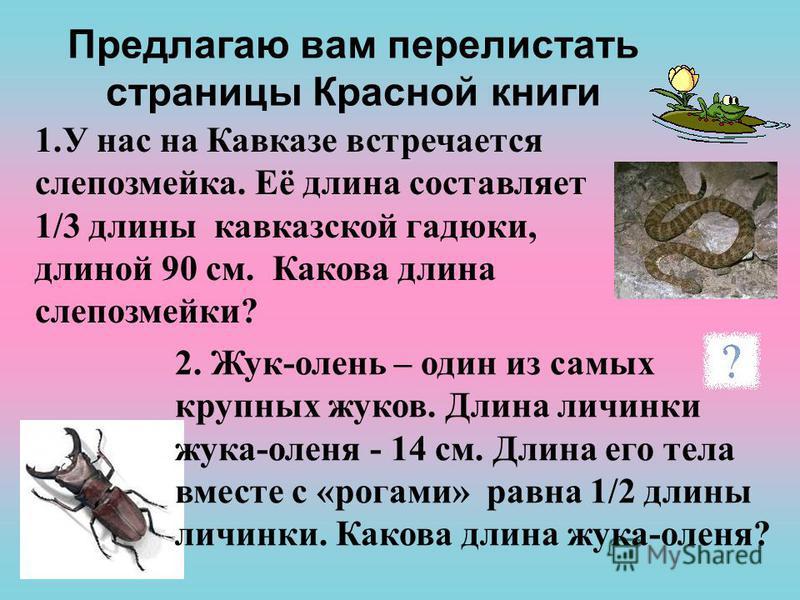 Предлагаю вам перелистать страницы Красной книги 1. У нас на Кавказе встречается слепозмейка. Её длина составляет 1/3 длины кавказской гадюки, длиной 90 см. Какова длина слепозмейки? 2. Жук-олень – один из самых крупных жуков. Длина личинки жука-олен