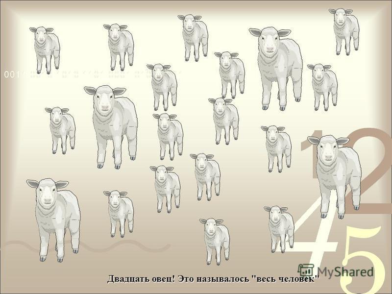 Двадцать овец! Это называлось весь человек