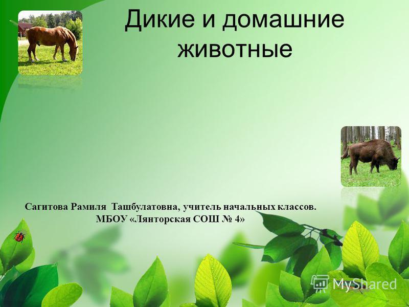 Дикие и домашние животные Сагитова Рамиля Ташбулатовна, учитель начальных классов. МБОУ «Лянторская СОШ 4»