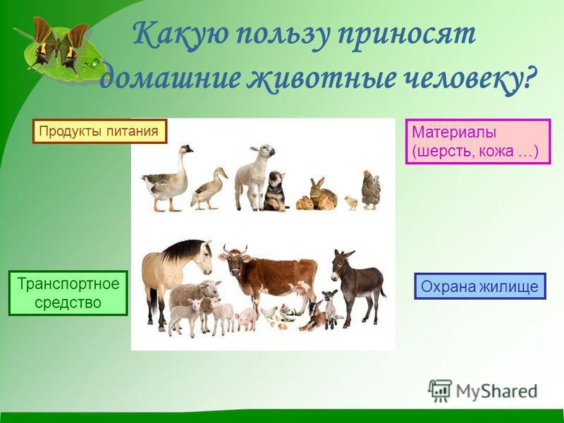 Какую пользу приносят домашние животные человеку? Продукты питания Транспортное средство Материалы (шерсть, кожа …) Охрана жилище
