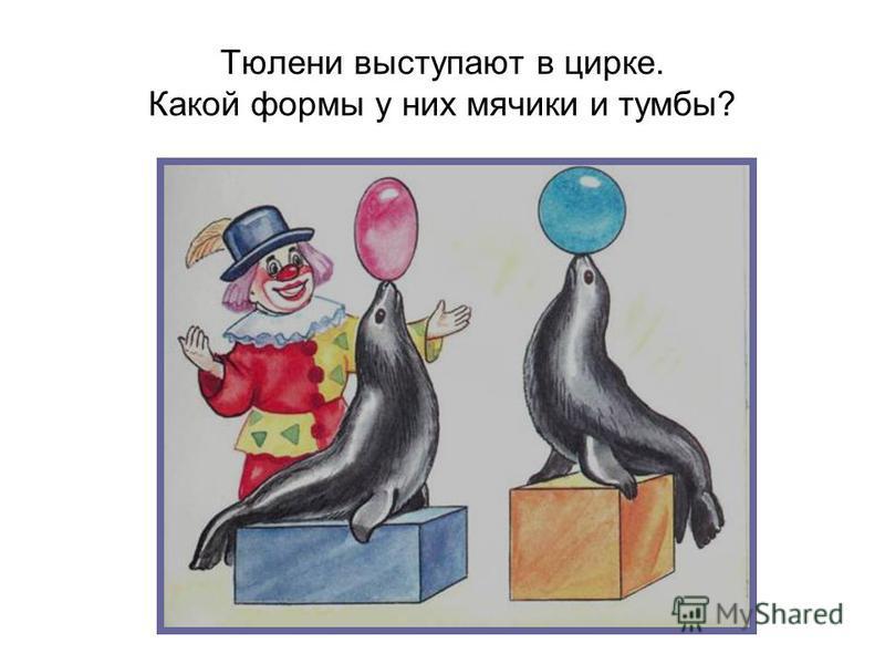 Тюлени выступают в цирке. Какой формы у них мячики и тумбы?