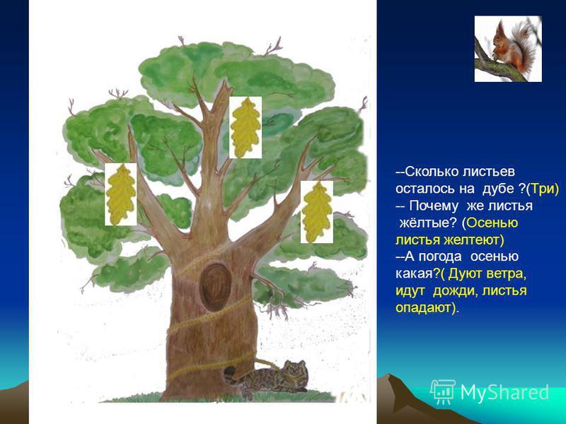 --Сколько листьев осталось на дубе ?(Три) -- Почему же листья жёлтые? (Осенью листья желтеют) --А погода осенью какая?( Дуют ветра, идут дожди, листья опадают).