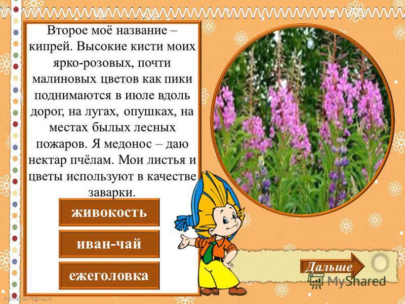 FokinaLida.75@mail.ru еже головка иван-чай живокость Дальше Второе моё название – кипрей. Высокие кисти моих ярко-розовых, почти малиновых цветов как пики поднимаются в июле вдоль дорог, на лугах, опушках, на местах былых лесных пожаров. Я медонос –