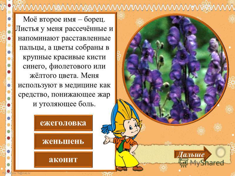 FokinaLida.75@mail.ru аконит женьшень еже головка Дальше Моё второе имя – борец. Листья у меня рассечённые и напоминают расставленные пальцы, а цветы собраны в крупные красивые кисти синего, фиолетового или жёлтого цвета. Меня используют в медицине к