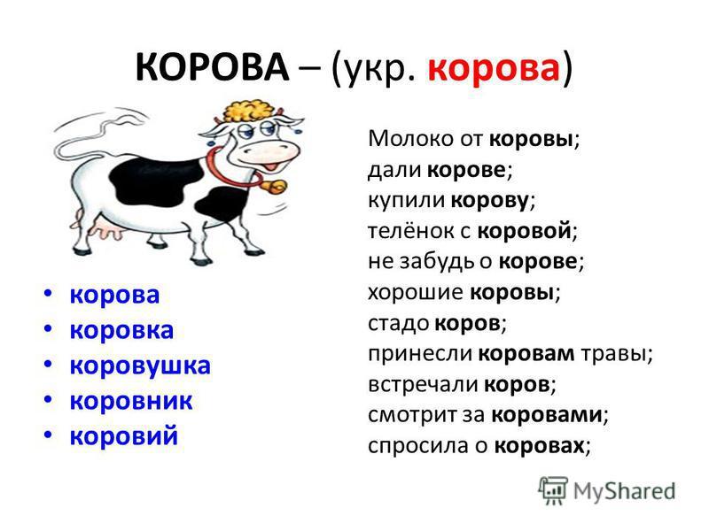 КОРОВА – (укр. корова) корова коровка коровушка коровник коровий Молоко от коровы; дали корове; купили корову; телёнок с коровой; не забудь о корове; хорошие коровы; стадо коров; принесли коровам травы; встречали коров; смотрит за коровами; спросила