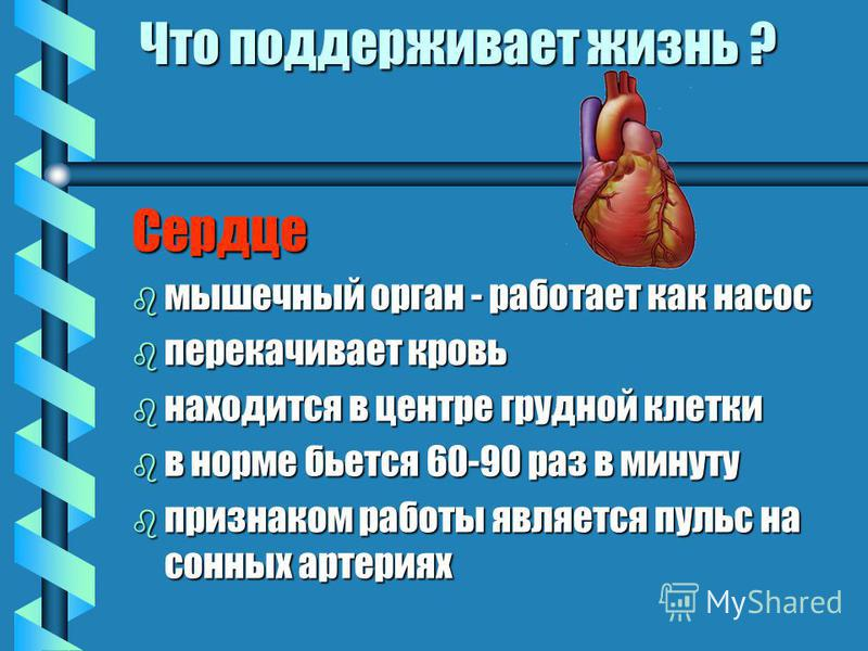 Что поддерживает жизнь ? Сердце b мышечный орган - работает как насос b перекачивает кровь b находится в центре грудной клетки b в норме бьется 60-90 раз в минуту b признаком работы является пульс на сонных артериях