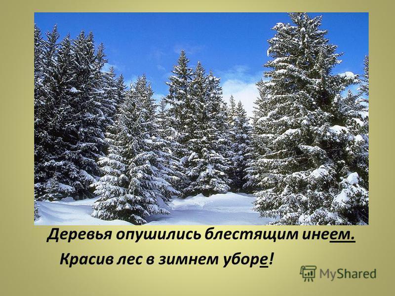 опушились, иней, деревья, блестящим лес, в, убор, красив, зимнем