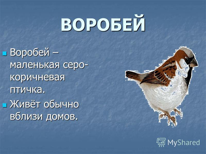 ВОРОБЕЙ Воробей – маленькая серо- коричневая птичка. Воробей – маленькая серо- коричневая птичка. Живёт обычно вблизи домов. Живёт обычно вблизи домов.