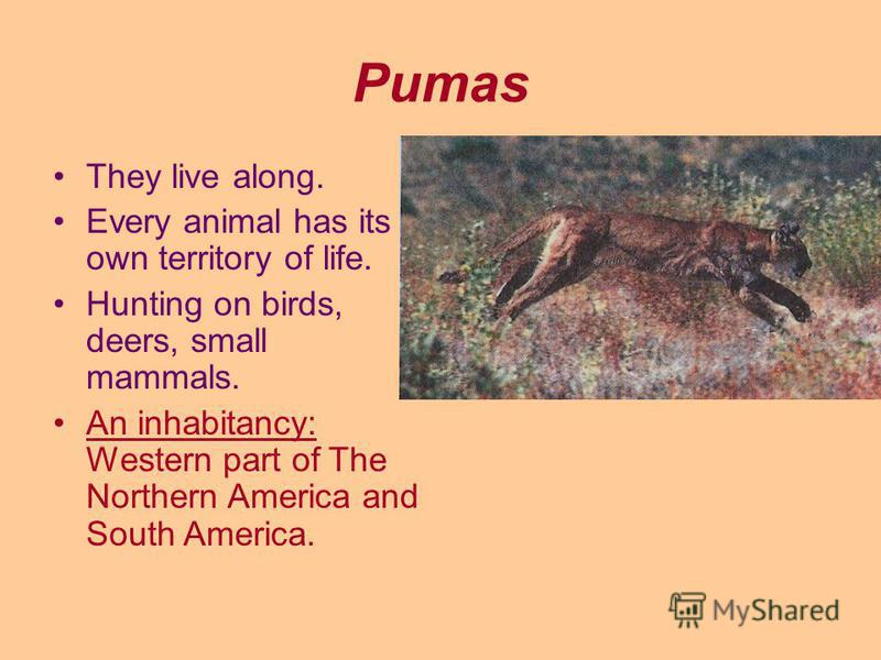 Pumas They live along. Every animal has its own territory of life. Hunting on birds, deers, small mammals. An inhabitancy: Western part of The Northern America and South America.