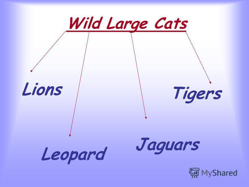 Wild Large Cats Lions Tigers Leopard Jaguars