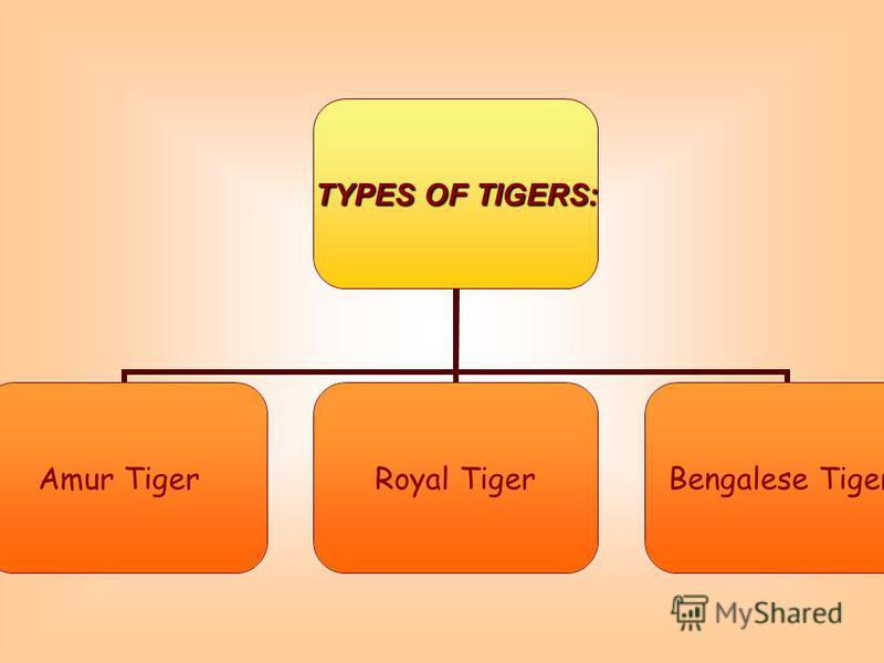 TYPES OF TIGERS: Amur TigerRoyal Tiger Bengalese Tiger