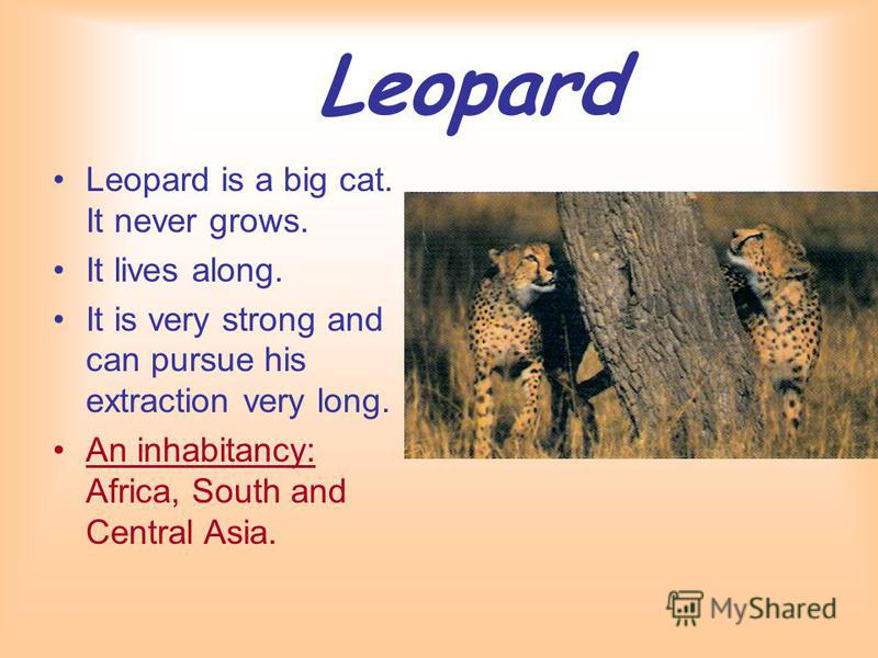 Leopard Leopard is a big cat. It never grows. It lives along. It is very strong and can pursue his extraction very long. An inhabitancy: Africa, South and Central Asia.