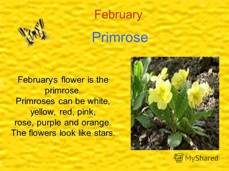 February Primrose February, s flower is the primrose. Primroses can be white, yellow, red, pink, rose, purple and orange. The flowers look like stars.