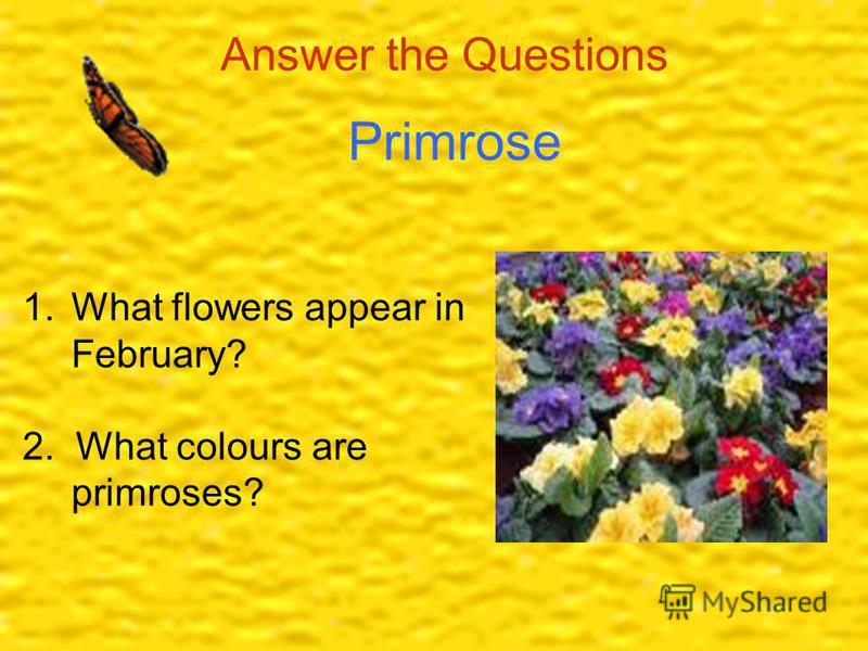 Answer the Questions Primrose 1.What flowers appear in February? 2. What colours are primroses?