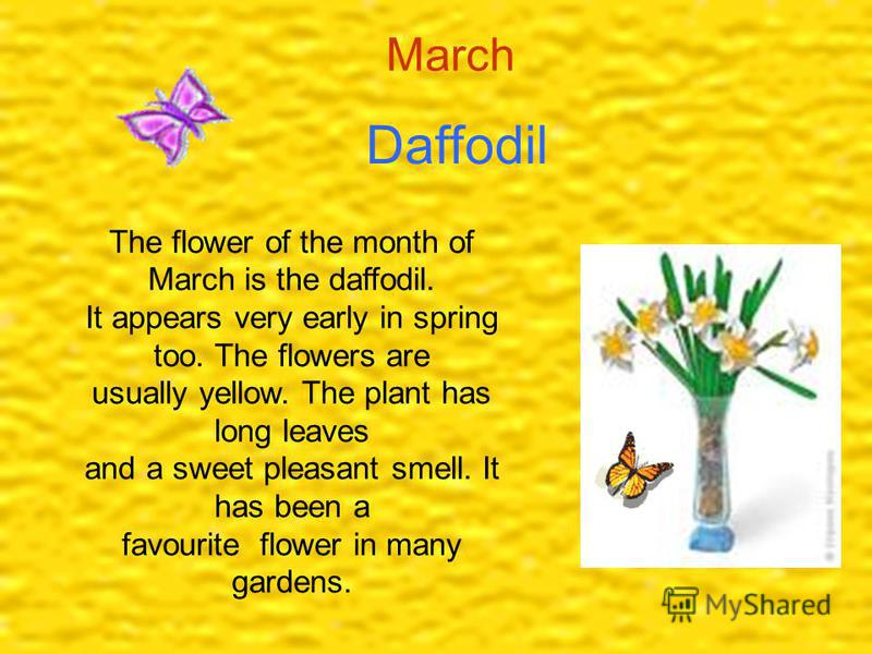 Daffodil March The flower of the month of March is the daffodil. It appears very early in spring too. The flowers are usually yellow. The plant has long leaves and a sweet pleasant smell. It has been a favourite flower in many gardens.