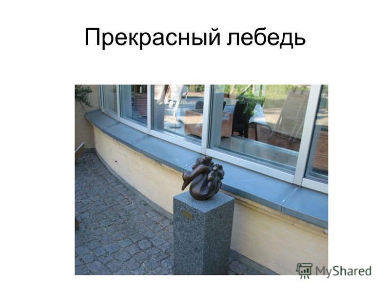 Прекрасный лебедь