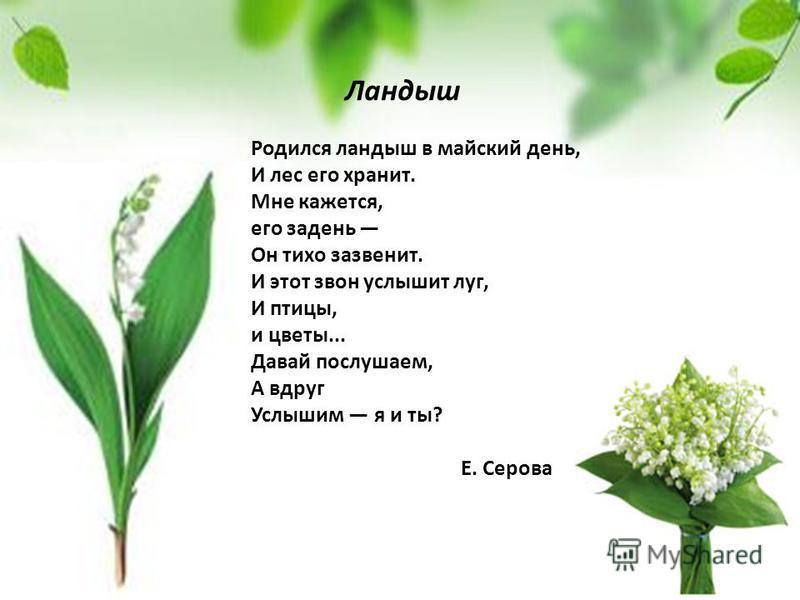 Родился ландыш в майский день, И лес его хранит. Мне кажется, его задень Он тихо зазвенит. И этот звон услышит луг, И птицы, и цветы... Давай послушаем, А вдруг Услышим я и ты? Е. Серова Ландыш