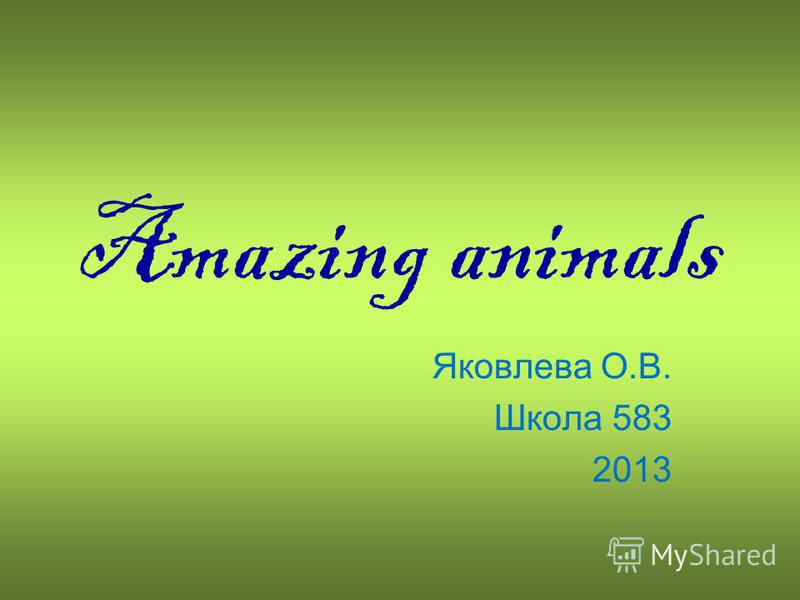 Amazing animals Яковлева О.В. Школа 583 2013